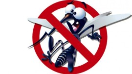 a-importancia-da-politica-nacional-de-combate-a-dengue--chikungunya-e-zika-